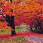 Chant d'automne…